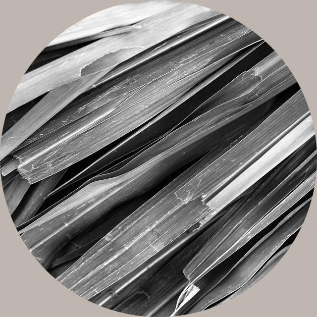 Vetivert Root Oil